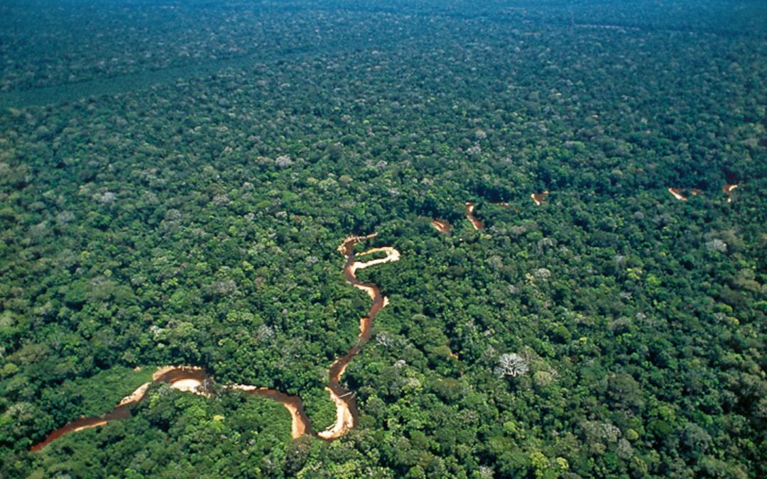 Caixabank y su proyecto de reforestación del Perú
