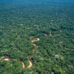 Caixabank i el seu projecte de reforestació del Perú