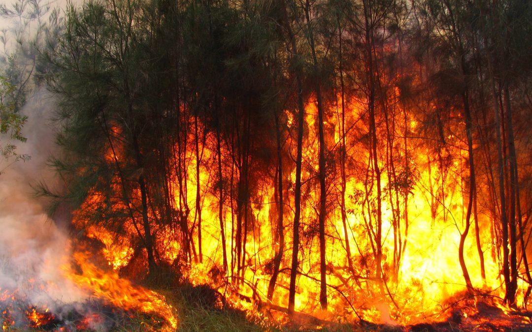 ¿Cómo afectan los incendios forestales en el medio ambiente?