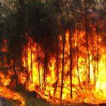Com afecten els incendis forestals al medi ambient?