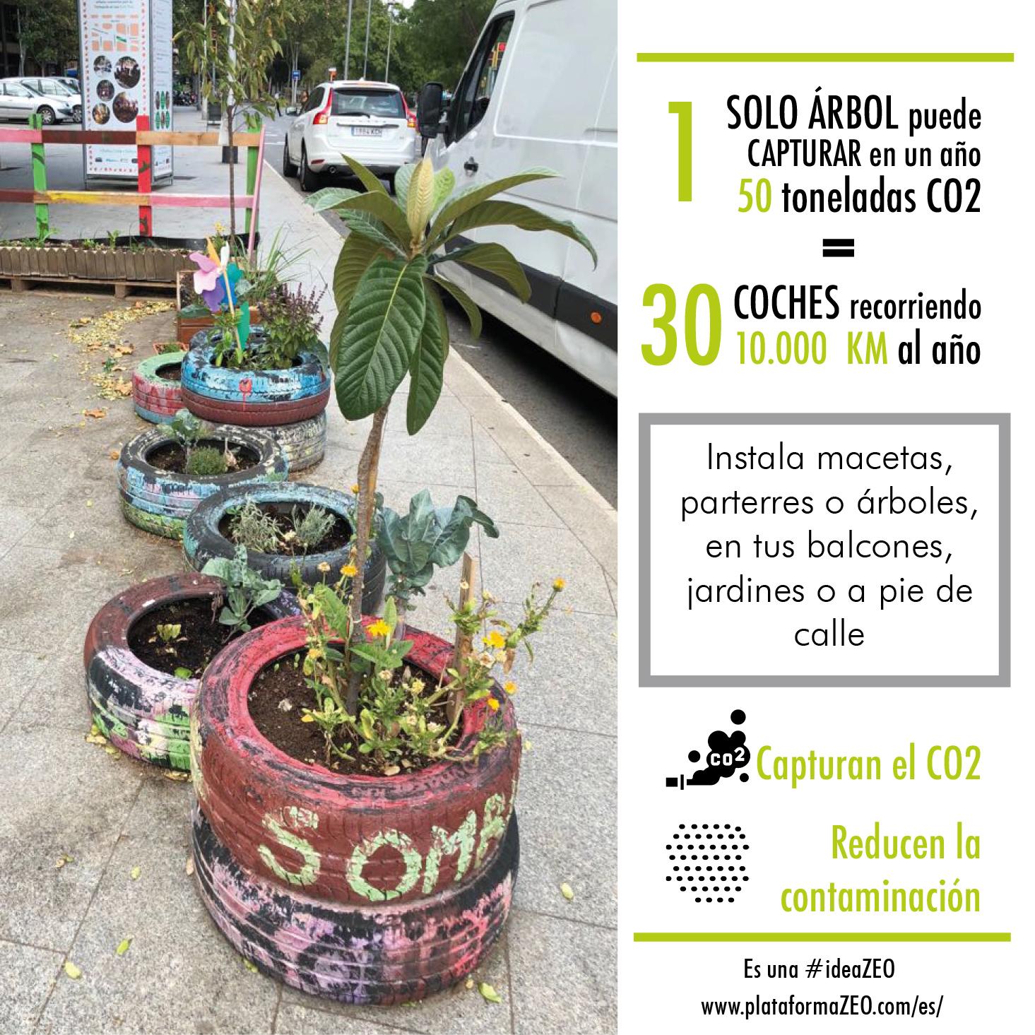 Plantas capturan CO2