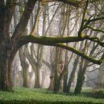 ¿Porque el uso de madera ayuda a frenar el cambio climático?