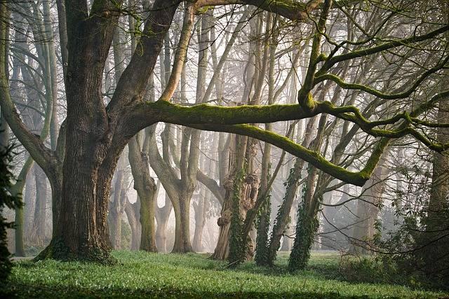 Perquè l'ús de fusta ajuda a frenar el canvi climàtic?