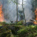 Incendios forestales y cambio climático: El pez que se muerde la cola