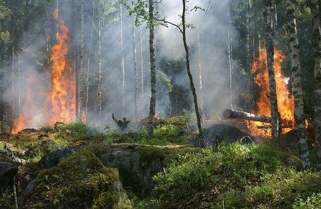 Incendis forestals i canvi climàtic: La importància de ser mésZEO