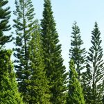 Participa en la #limpiezaZEO de bosques de Rubí