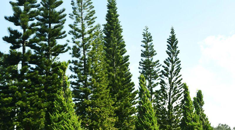 Participa a la #netejaZEO de boscos a Rubí
