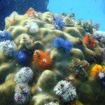 Es imposible salvar la biodiversidad sin frenar el cambio climático