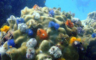 És impossible salvar la biodiversitat sense frenar el canvi climàtic