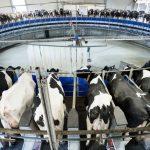"""""""Podem salvar el món abans de sopar"""": Limitar el consum de carn acabarà amb el canvi climàtic"""