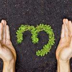 Nace en Cataluña una nueva forma para compensar CO2 en proyectos locales