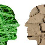 Quina és la postura dels espanyols davant del canvi climàtic?