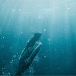 Día Mundial de los Océanos: ¿Qué marcas están comprometidas con los océanos?