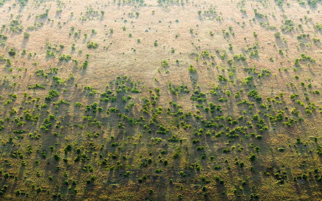 Una gran muralla verde en África para contrarrestar los efectos del cambio climático