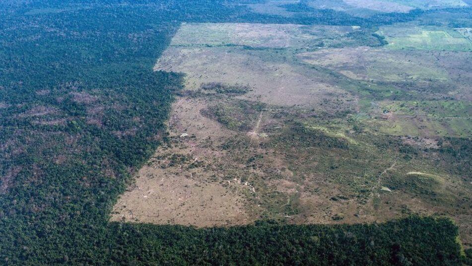 Ganadería intensiva i deforestación