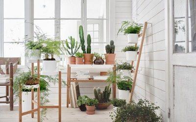 Aquestes són les plantes que t'ajudaran a reduir el CO₂ a la teva llar