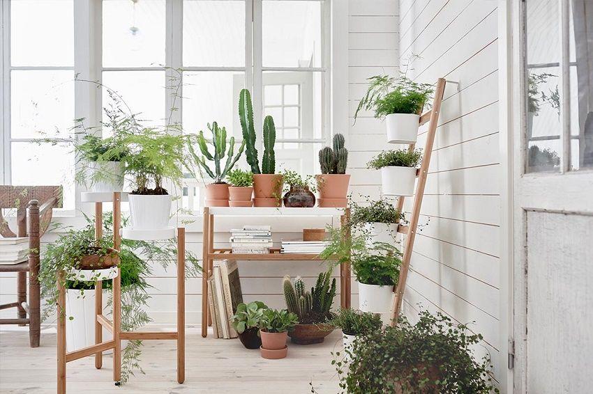 Estas son las plantas que te ayudarán a reducir el CO2 en el hogar