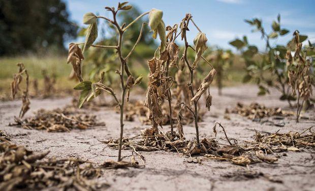 El sector agrícola serà un dels més castigats pel canvi climàtic