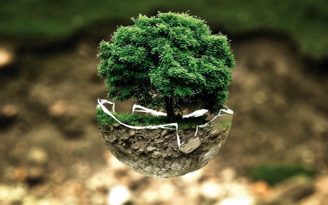 Los bosques correctamente gestionados capturan más CO2