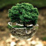 Els boscos correctament gestionats capturen més CO2
