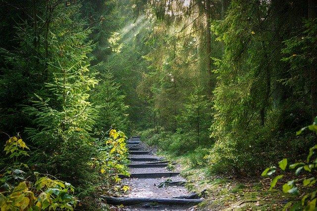 Bosques correctamente gestionados capturan CO2
