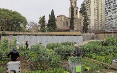 El huerto urbano ayuda a construir ciudades más sostenibles