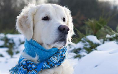 ¿Las mascotas también pueden ser víctimas del cambio climático?
