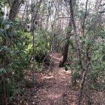 Maracanã presenta el primer Bosque ZEO del mundo